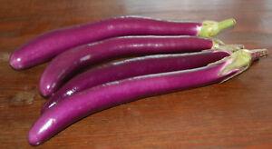 20-Samen-Aubergine-Long-Purple-lange-violette-Auberginen-Eierpflanze
