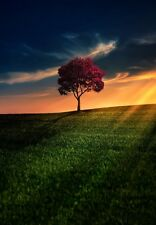 MAPLE TREE AT SUNSET LANDSCAPE POSTER PRINT 36x25 HI RES