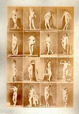 C02 Calavas photo étude pour peintre vintage albumen print albuminé nus femme