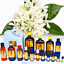 3ml-Essential-Oils-Many-Different-Oils-To-Choose-From-Buy-3-Get-1-Free thumbnail 68