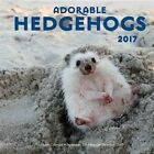 Adorable Hedgehogs 2017 Editors of Rock Point Calendar 9781631062100