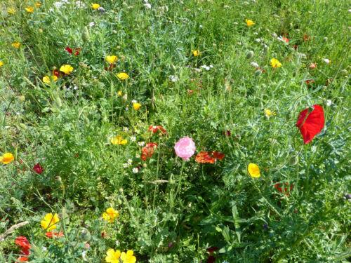 10 Samenbomben Gastgeschenk Blumensamen Samen Seedballs Seedbombs Bienenparadies