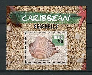 Nevis-2015-Gomma-integra-non-linguellato-Caraibi-CONCHIGLIE-1v-S-S-ROYAL-PETTINE-DI-VENERE-Sea
