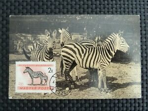 La Hongrie Mk 1961 Zebra Maximum Carte Carte Maximum Card Mc Cm C1187 Prix ​​De Rue
