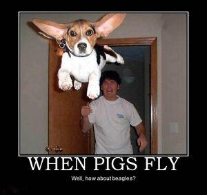 "Funny Beagle  refrigerator magnet 3 1//2 x 4 /"""