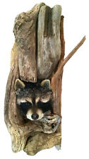 Peeping Raccoon from Tree Taxidermy Wall Mounted Animal Statue Gift