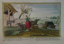 AGRICOLTURA - SCENA CAMPESTRE - ACQUAFORTE FINE '700 - COLORI D'EPOCA