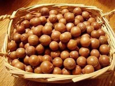 Macadamia integrifolia Nut tree 10 seeds