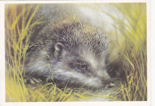 1989 RARE Cute hedgehog hides in grass by Isakov Russian ...