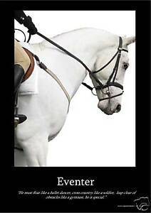 Eventer-Horse-Poster-Equestrian-A3-FREE-UKP-amp-P-SALE-WOW