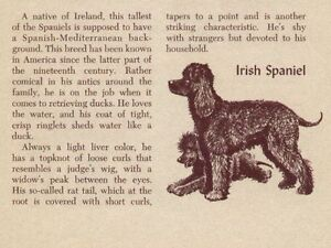 Irish Water Spaniel - Vintage Dog Print - 1954 Dennis | eBay
