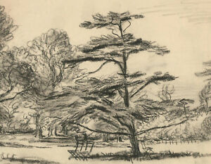 Harold-Hope-Read-1881-1959-Charcoal-Drawing-Tree-Studies