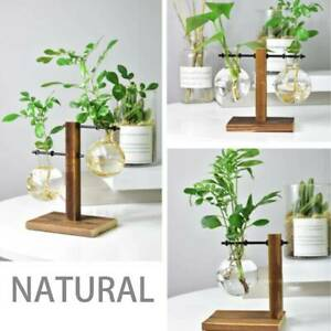 Hydroponic-Vase-Solid-Desktop-Stand-Plant-Container-Bulb-Wooden-Glass-Planter