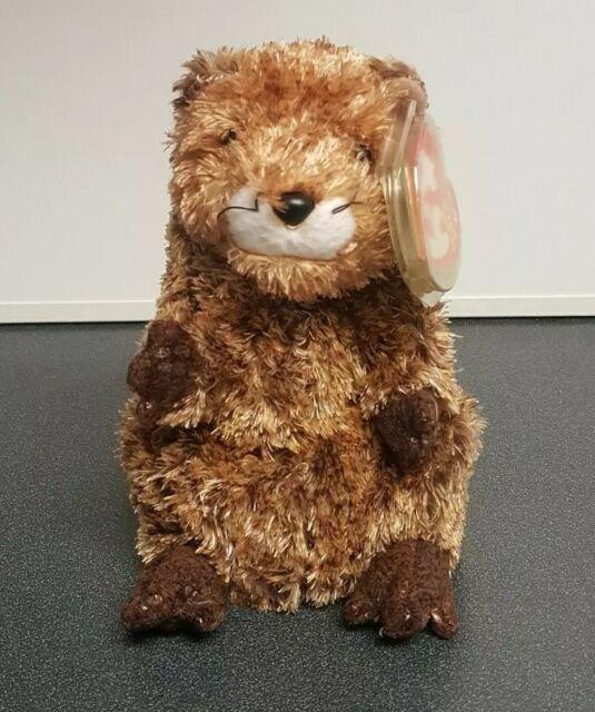 Ty Beanie Baby ~ PUNXSUTAWN-E PHIL the Groundhog MWMT Internet Exclusive