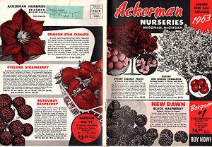 Image Is Loading Ackerman Nurseries Bridgman Michigan Vintage 1963 Catalog Trees