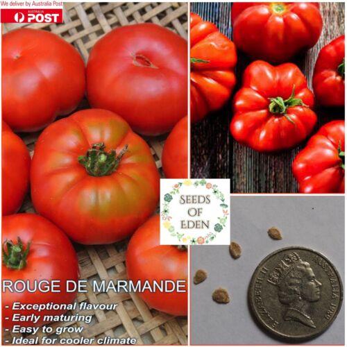 "SOLANUM LYCOPERSICUM 25 TOMATO /""Rouge De Marmande/"" SEEDS ; Popular variety"