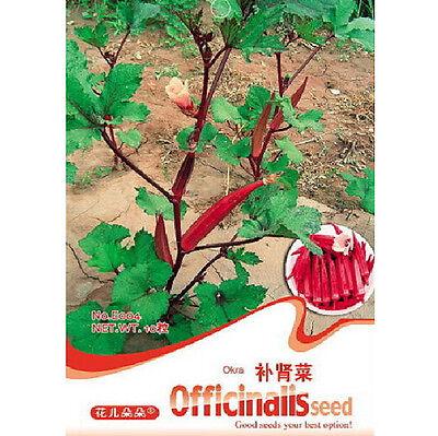 FD1289 Good Effect Herb Kidney Dish Seed Okra Seed Abelmoschus ~1 Pack 10 Seeds~