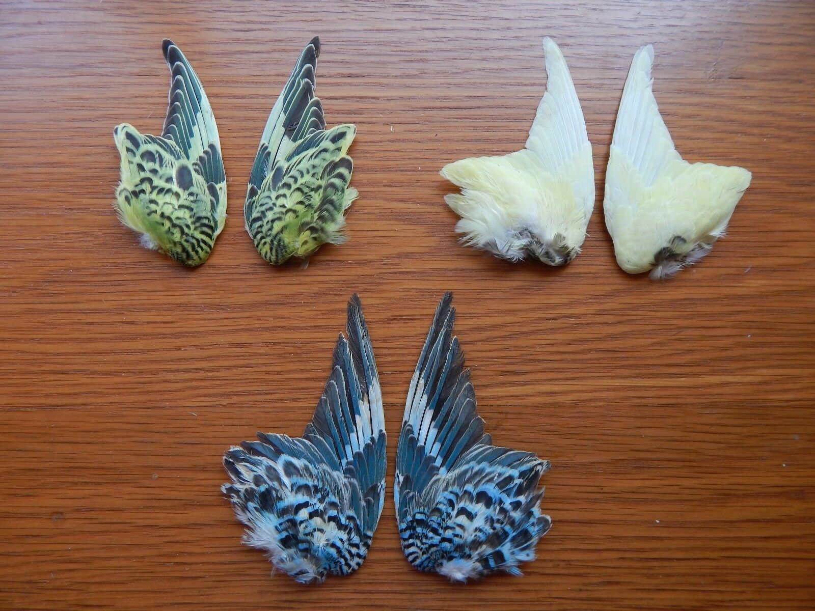 3 Pair Dried Domestic Budgie Wings Bird Wings Fly Tying Arts Crafts Taxidermy