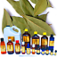 3ml-Essential-Oils-Many-Different-Oils-To-Choose-From-Buy-3-Get-1-Free thumbnail 8