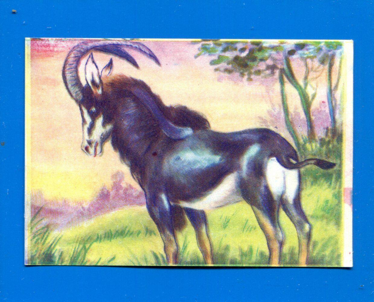 -STICKER-Recuperata 1//210 ANIMALI-RACCOLTA ANIMALI-LAMPO 1964-FIGURINA a scelta