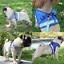 Cat-Reflective-Walking-Jacket-Harness-Leash-Pets-Puppy-Clothes-Adjustable-Vests thumbnail 11