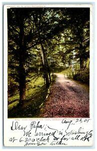 POSTCARD Road Through the Trees Georgetown University Washington DC 1905