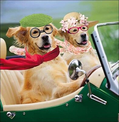 Canine Capers Square Greeting Card Scream Animal Humour Photo Cards Blank Inside