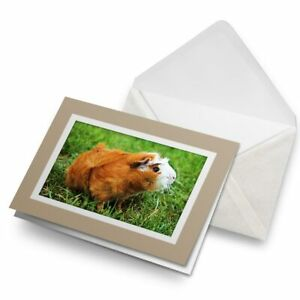 Greetings-Card-Biege-Ginger-Guinea-Pig-Rodent-15574