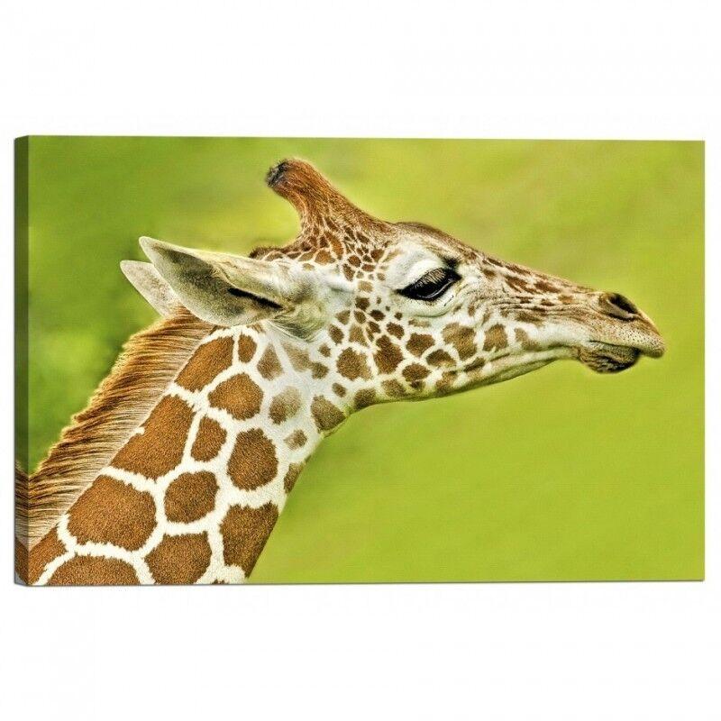 Quadro Stampa su Telaio Tela con Telaio su Giraffa 02de43