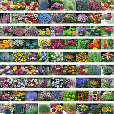 200 x seeds mixed garden flowers Spring and autumn of the four seasons climbing