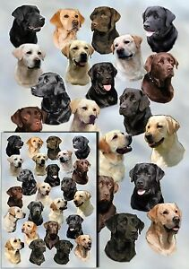 Labrador-Retriever-Dog-Gift-Wrapping-Paper-By-Starprint-1-sheet-plus-gift-card