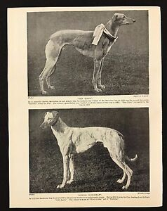 GREYHOUND TWO NAMED CHAMPION DOGS OLD ORIGINAL 1934 DOG PRINT