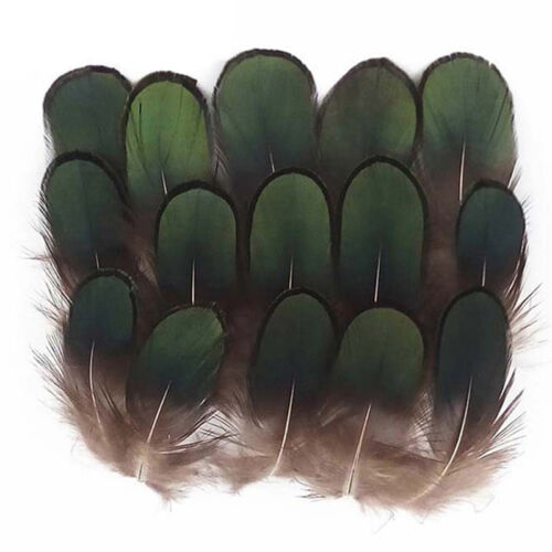 50stk in Set Green LADY AMHERST PHEASANT Feathers Home Festival Decot Neue K5O0