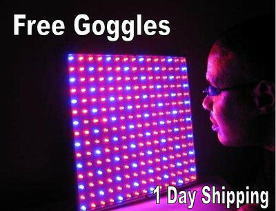 Blue Red LED Light Therapy Skin Rejuvenation Photon  Acne Blue Light Therapy