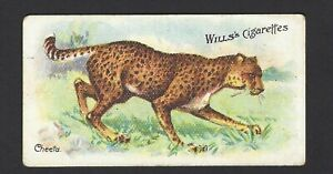 WILLS-AUS-WILD-ANIMALS-OF-THE-WORLD-47-CHEETAH