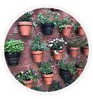 plantpothangers