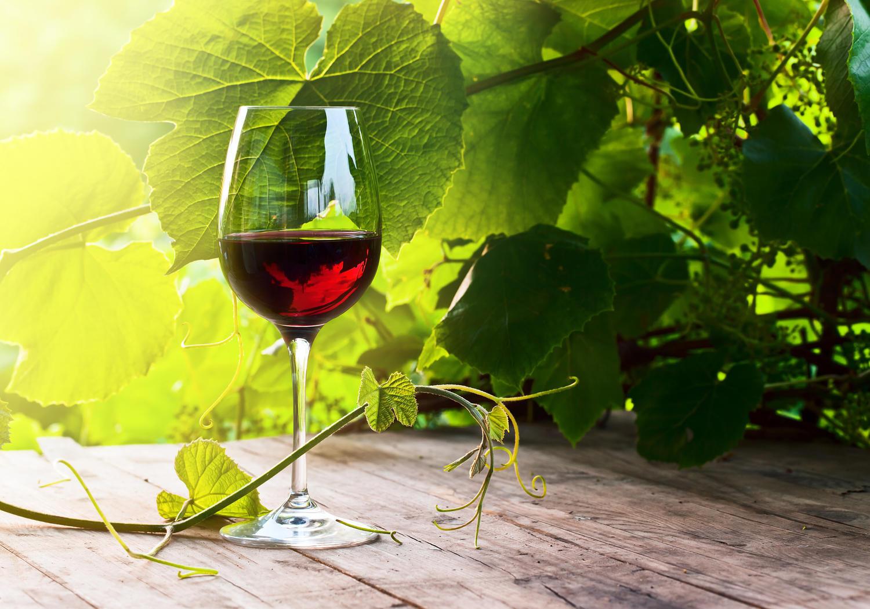 Fototapete Glas mit Rotwein im Weinberg   Tapete Vliestapete