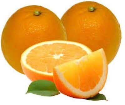 Flavor Oil 1/4 oz Orange Lip Balm Edible