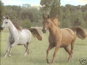 "BEAUTIFUL HORSES COUNTRY 18"" inch Wallpaper bordeR Wall"