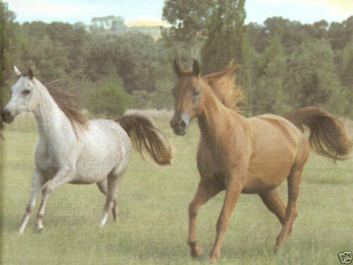 "BEAUTIFUL HORSES COUNTRY 18/"" inch Wallpaper bordeR Wall"