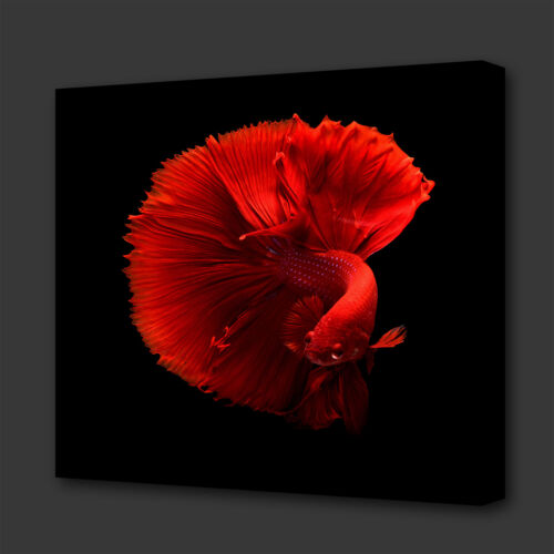 STUNNING RED TROPICAL FISH MODERN BOX CANVAS PRINT WALL ART PICTURE PHOTO