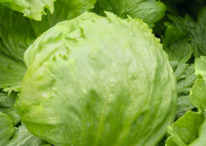 100-Graines-De-Salade-Laitue-Iceberg-Frais-De-Port-Unique