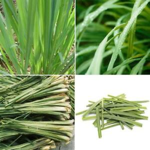500Pcs-Fast-Grow-Lemon-Grass-Herb-Seeds-Ornamental-Cymbopogon-Home-Balcony-H5Y5