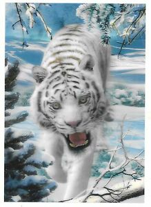 snow-white-tiger-3D-Lenticular-raster-Holographic-Stereoscopic-Picture-Wall-Art