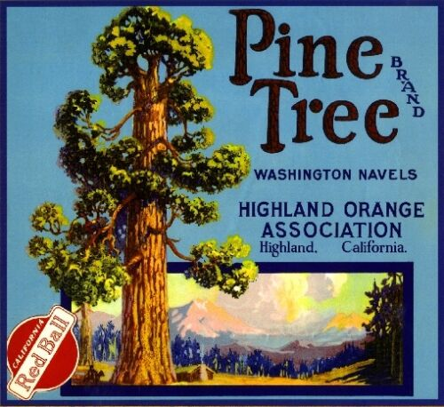 Highland San Bernardino Pine Tree Orange Citrus Fruit Crate Label Art Print