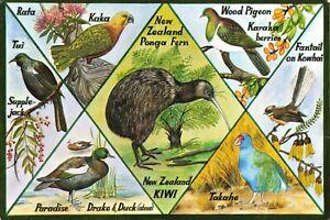 New-Zealand-Multi-View-Postcard-Birds-and-Fauna-N-Z-77Z