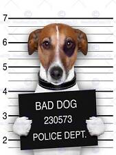 JACK RUSSELL DOG BREAK THROUGH PAPER HOLE PHOTO ART PRINT POSTER BMP2044A