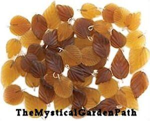 54-Amber-Autumn-Pressed-Glass-Leaf-Charm-Mix