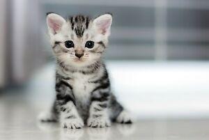 A1-Cute-Kitten-Poster-Art-Print-60-x-90cm-180gsm-Cat-Animal-Lover-Gift-8433