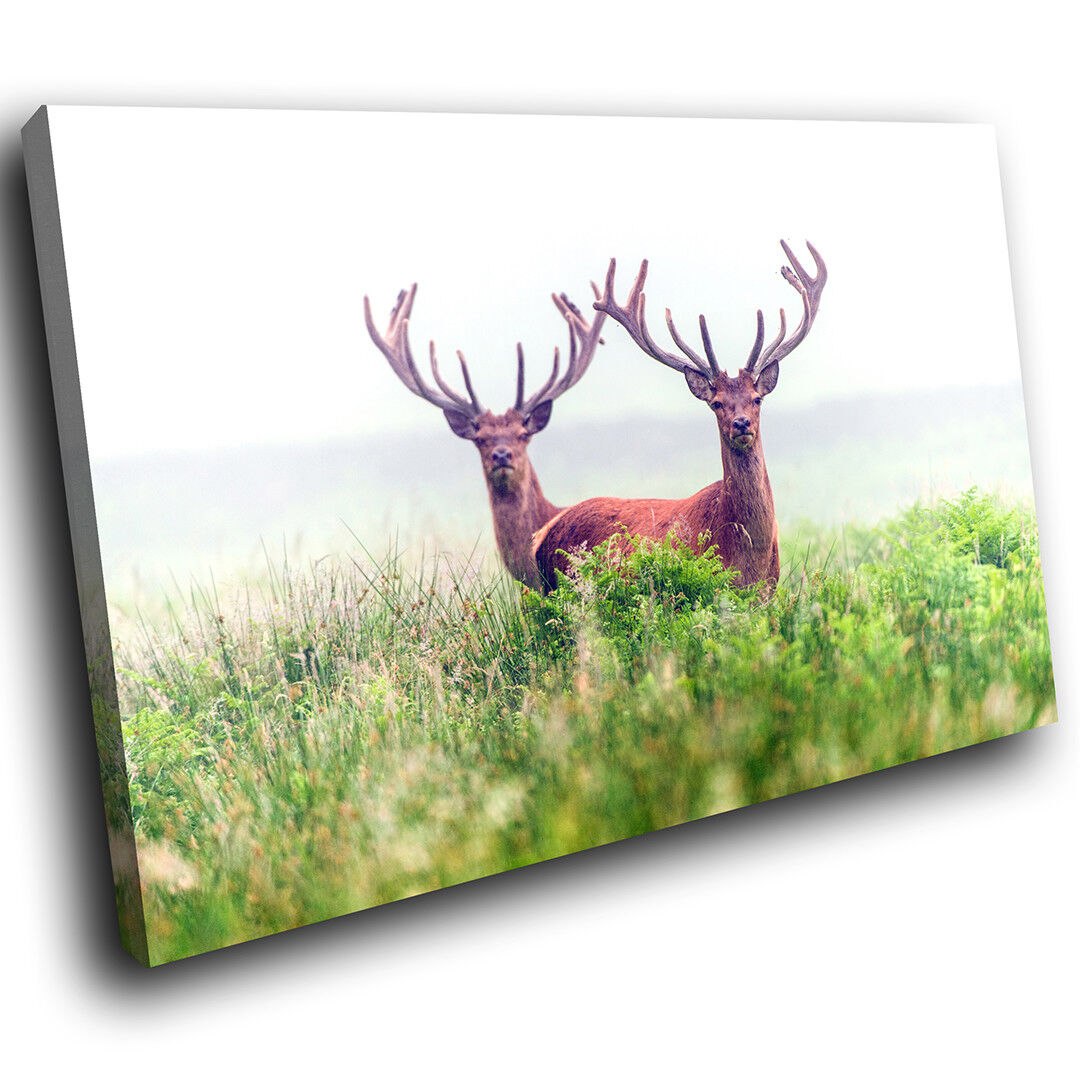 A558 Stags Antlers Grün Grass Funky Animal Canvas Wall Art Large Picture Prints